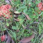 Mushroom's montane2